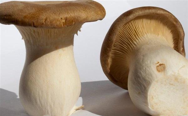Білий степової гриб: склад, калорійність, користь, рецепти