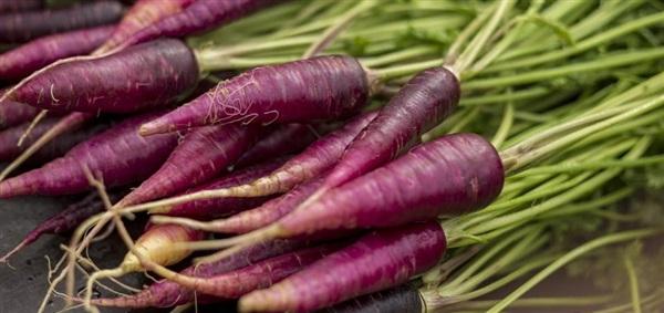 Морква фіолетова: склад, калорійність, користь, рецепти