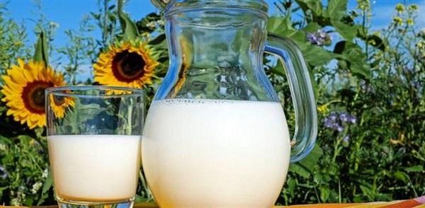 Соняшникова молоко: користь і шкода, як приготувати, які рецепти