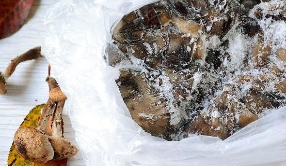 Як правильно заморозити опеньки на зиму: рецепти та поради