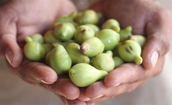 Зливу какаду: користь, шкоду, як їдять мурунгу, рецепти страв