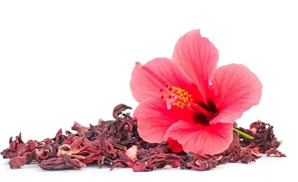 Квіти гибискуса: корисні властивості, шкоди, рецепти